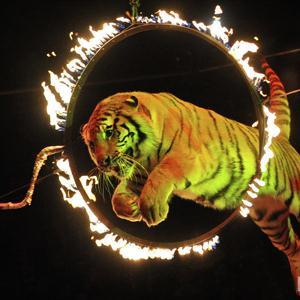 Цирки Вознесенского