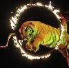 Цирки в Вознесенском